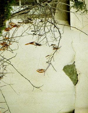 کاش چون پاییز بودم … از آرش اذانی