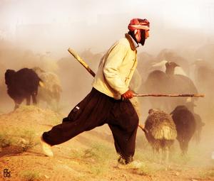 Shepherd  Alireza Eslami