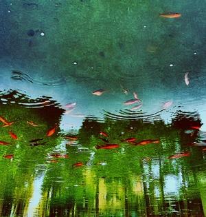 حوض ماهیها از بابک آزادبخت