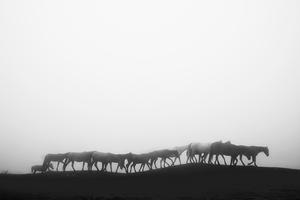 Wild Horses  Atila Soroor