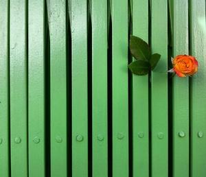 گل و نرده از بابک آزادبخت