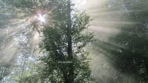 Light Behind Woods  mohammad reza Jamalifard