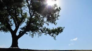 Tree on Hill  mohammad reza Jamalifard