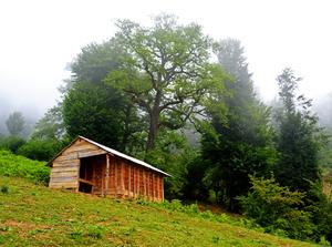 Cottage  Vahid Sabouri