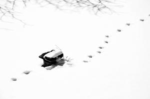 footstep  Vahid Sabouri