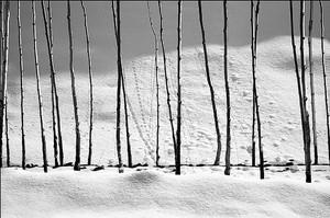 از مجموعه سفید برفی  از عباس  کیا رستمی