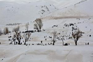 winter  shahrouz heidari
