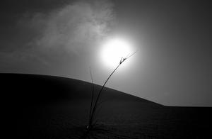 desert  shoresh mobasheri