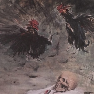 Rooster  anahita dargahi