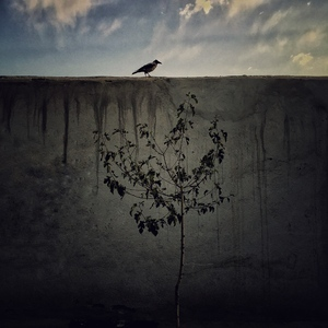 the loneliest bird  pegah ghadiri