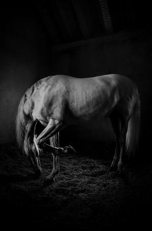 اسب از شورش مباشری