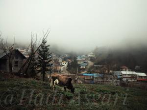 Landscape of village  Hadi Asgari