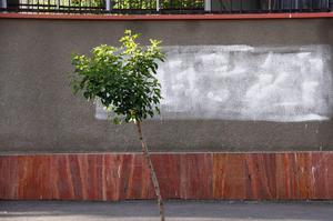 Untitled  Zarvan Rouhbakhshan