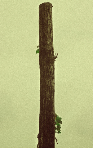 Tree without ax 3  masoud nikokar