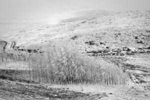 trees  mohammad Ahangari