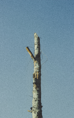Tree without ax 2  masoud nikokar