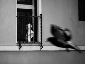 پنجره از پرهام دیده ور