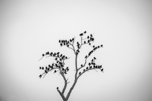 birds  mohammad Ahangari