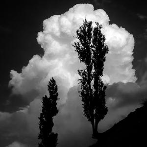 درخت از شورش مباشری