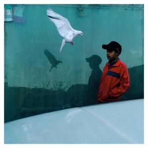 white pigeon   Ali Shams