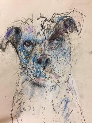 Dog  Anali Taherian