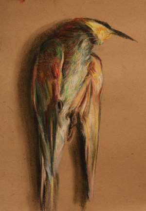 A study of a dead bee eater  ghader Mansoori