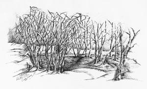 Chashaw trees  Mohamadmehran Yousefzadeh