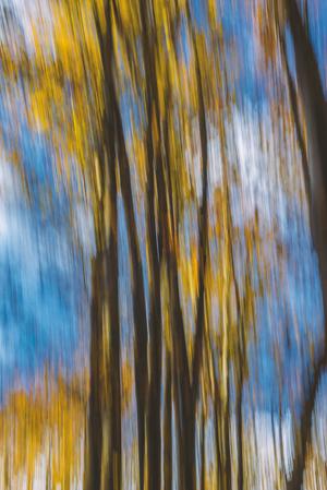 Forest   Pooria Hatami