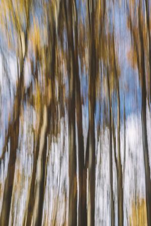 Forest 3   Pooria Hatami