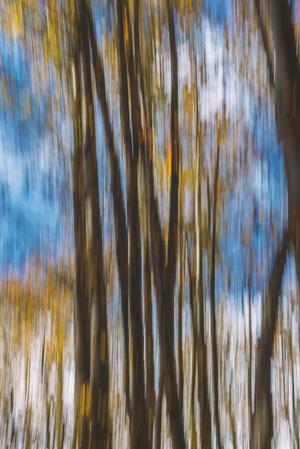 Forest 2   Pooria Hatami