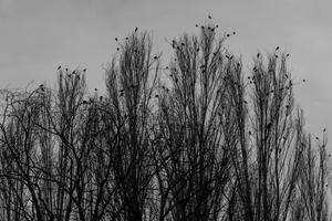 birds  shoresh mobasheri