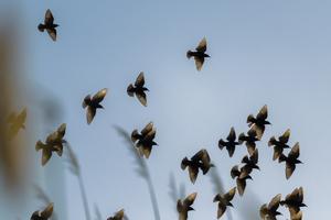 birds 2  shoresh mobasheri