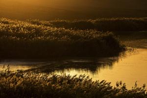 sunset  shoresh mobasheri
