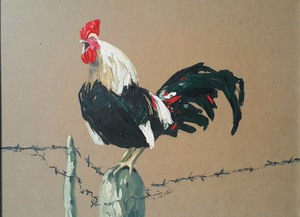 Rooster1  Arman Yaghoubpour