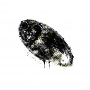 Owl Land 03  Soheil Hosseini