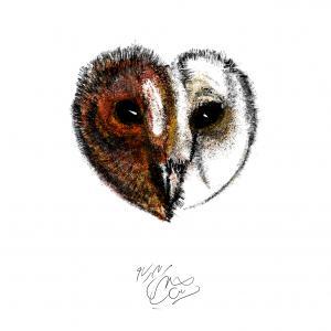 Owl Land 07  Soheil Hosseini
