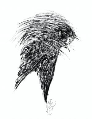 owl Land 01  Soheil Hosseini