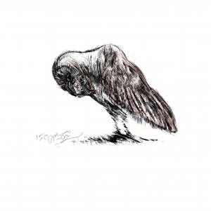 Owl Land 05  Soheil Hosseini
