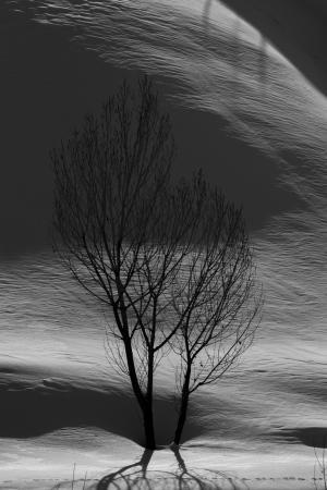 Tree 3  shoresh mobasheri