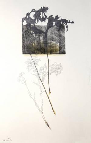 Untitled  Nazila Moghadam