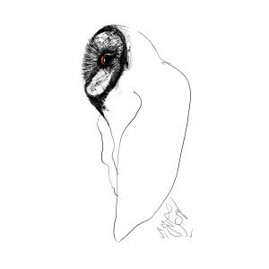 Owl Land 12  Soheil Hosseini