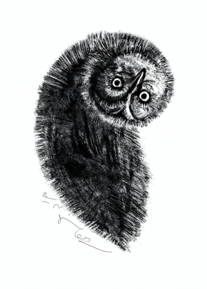 Owl Land 06  Soheil Hosseini