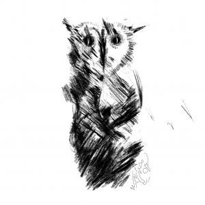 Owl Land 11  Soheil Hosseini