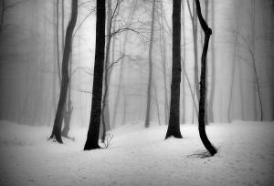 The passion of trees 02  Ali Shokri  علی شکری