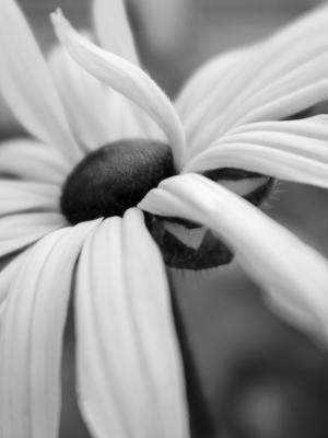 flower  shoresh mobasheri