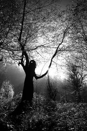 The passion of trees 03  Ali Shokri  علی شکری