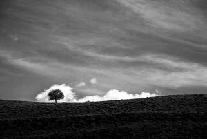 The passion of trees 01  Ali Shokri  علی شکری