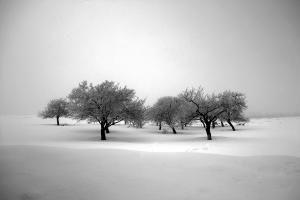 The passion of trees  Ali Shokri  علی شکری