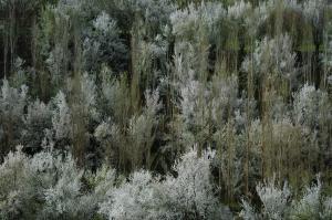spring   Salar Arkan