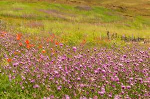 Pink Flower Farm  majid hojati
